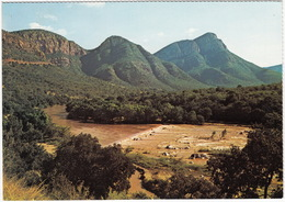 Mountain Scenery - Olifants River Valley -  Eastern Transvaal - (South Africa) - Zuid-Afrika