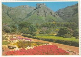 Kirstenbosch - National Botanic Gardens ,Cape Town - (South Africa) - South Africa
