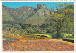 Kirstenbosch National Botanic Gardens - Nasionale Botaniese Tuin - (South Africa) - South Africa