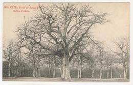 91 - Draveil         Chêne D'Antin  (Forêt De Sénard) - Draveil