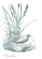 A BUZIN  RALE  D'EAU SEPIA - 1985-.. Pájaros (Buzin)