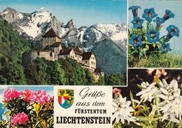 Liechtenstein - Vaduz ,Enzian - Liechtenstein
