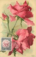 KLEIN CATHARINA (illustrateur) -  Fleurs Rose Rouges, Carte Maximum. - Klein, Catharina