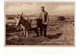 Irlande - Near Clifden, Connemara (âne) / Editions Joyce N°1484 - Other