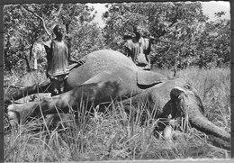 """Carte Postale De Côte D'Ivoire """"Chasse à L'Eléphant"""" 1953 - Ivory Coast"""