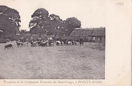 CONGO  Troupeau De La Compagnie Francaise Du Haut Congo, à POINTE NOIRE - Congo Francese - Altri