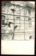 PARIS - Jardin Des Plantes - Cage Des Vautours - CP Très Ancienne, Vers 1900, Dos Non Divisé. - Oiseaux