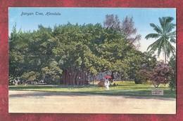 Hawaii, Honolulu, Indian Banyan Tree, Unused - Honolulu