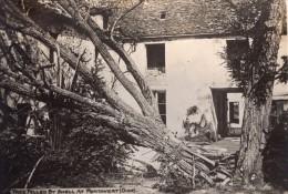 Oise Pontavert Arbre Tombe Par Un Obus WWI Ancienne Photo 1914-1918 - War, Military