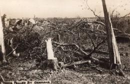 Scene De Desolation Arbres Abattus Par Les Allemands WWI Ancienne Photo 1914-1918 - War, Military