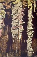 Aven D'orgnac - Ardeche - Groupe De Stalagmites Vues Du Sud Hauteur 18  M. - Formato Grande Viaggiata – E 7 - Postcards