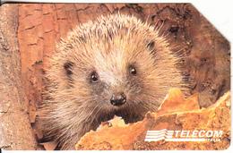 ITALY - Animal, Exp.date 31/12/00, Used - Zonder Classificatie