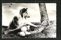 AK Lassie, Filmszene Mit Tommie Rettig - Acteurs