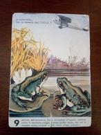 Cartolina Unione Nazionale Protezione Antiaerea 1936   Leggermente Strappata - Humorísticas