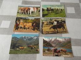 LOT Van 118 Postkaarten: KOEIEN - ALGEMEEN - Postcards