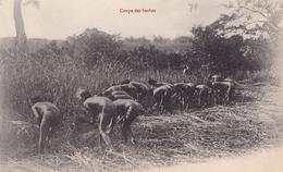 CONGO  Coupe Des HERBES  ( Plan Animé ) - Congo Français - Autres