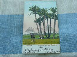 La Caire Pyramide Vue Des Palmiers Egypt - Cairo