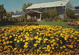 Marigolds And The Tropical Aviary, Calgary Zoo, Calgary, Alberta - Calgary