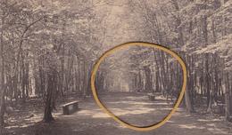 """VERVIERS ACP """"Coin Dans Le Parc De La Tourelle""""  Voir Scans - Verviers"""