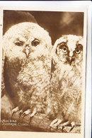 MOSCOW ZOO OWLS - Birds
