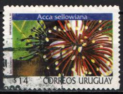 URUGUAY - 1999 - ACCA SELLOWIANA - USATO - Uruguay