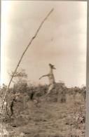 Mozambique ** & Postal, Pictures Of Mozambique,  Cambaco Edition  (6884) - Mozambique