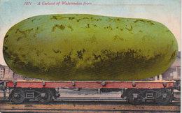 1871 - A Carload Of Watermelon   - San Francisco - San Francisco