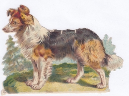 BEAU DECOUPIS CHIEN COLLEY / 13X10 - Animaux
