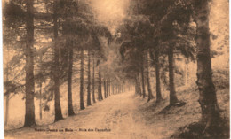 NOTRE-DAME-AU-BOIS  Bois Des Capucins. - Overijse
