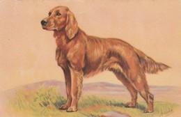 Chien : Chien De Chasse :  ( Illustrateur : M. Gear ) - Dogs