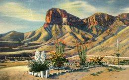 ARBRE(CACTUS) ETATS UNIS - Cactus