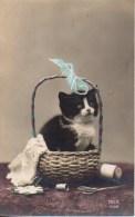 Chat Dans Un Panier - Cats