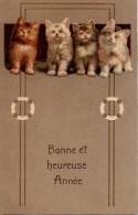 CHAT  Carte Gaufrée De 4 Chats - Katten