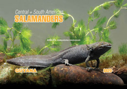 Guyana 2018 Amphibians - Central + South American Salamanders (ss/1v), MNH - Guyane (1966-...)