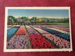Nederland Holland Pays-Bas Bloembollenvelden. Flower-fields - Bloemen
