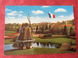 Nederland Holland Pays-Bas Bloemenland. Molenland - Bloemen