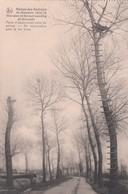 DIKSMUIDE /  OORLOG 1914-18 / OBSERVATIEPOST IN BOOM / POSTE D OBSERVATION DANS L ARBRE - Diksmuide