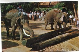 ELEPHANT(THAILANDE) - Thaïlande