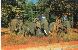 ELEPHANT(THAILANDE) CHIANGMAI - Thaïlande