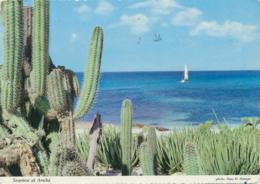 Aruba [AA10-1773 - Aruba