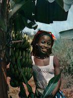 CARTE POSTALE D'AFRIQUE - CUEILLETTE DES BANANES - L'AFRIQUE EN COULEURS - Postcards