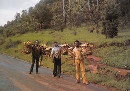 CAMEROUN Kamerun Nord Ouest Du Cameroun MAIZE Les Porteurs (scan Recto-verso) FRCR90948 - Camerun