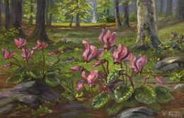 W Fruh Paysage Sous Bois Cyclamen - Pittura & Quadri