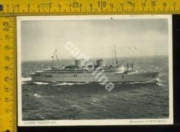 Marina Navigazione Nave Lloyd Triestino Victoria - Barche