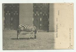 Antwerpen - Anvers  * Jardin Zoologique - Zebra  (Zoo, Tierpark, Dierentuin) - Antwerpen