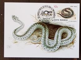 ROUMANIE Reptiles, Reptile, Serpents Serpent. Yvert N° 4088 Carte Maximum, FDC, Premier Jour - Serpents