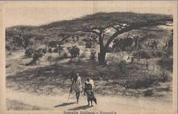 Somalia Italiana - Boscaglia - HP1433 - Somalia