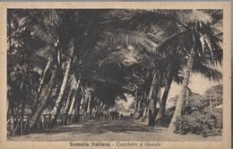 Somalia Italiana - Coccheto A Genale - HP1434 - Somalia