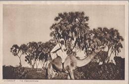 Agordat - Un Cammelliere - HP1445 - Eritrea