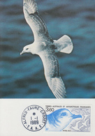 Carte  Maximum  1er  Jour   T.A.A.F    Oiseau  :   Pétrel   Bleu    1989 - French Southern And Antarctic Territories (TAAF)